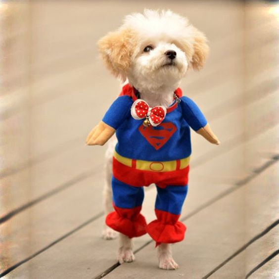 It's a bird! It's a plane! No, it's super dog!: