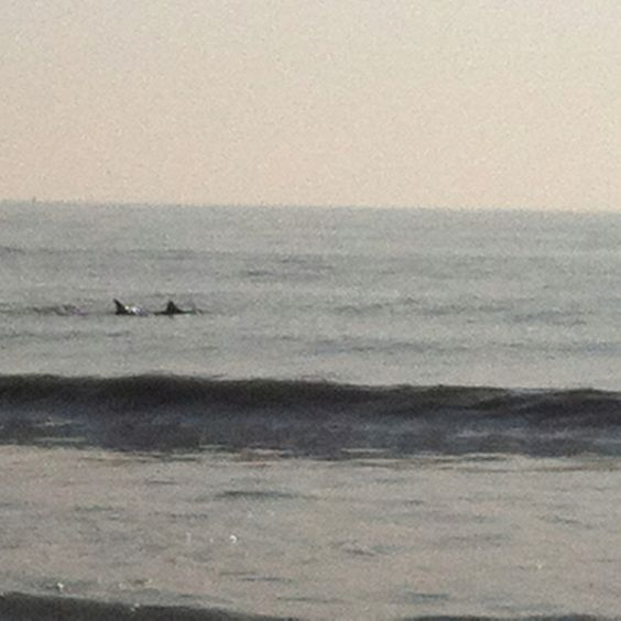 Dolphins 86th street