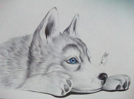 dibujos de lobos 4