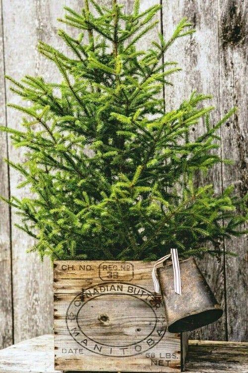 Weihnachtsbaum Im Topf Richtig Pflegen Und Noch Viele Jahre Bewundern Naturliche Weihnachten Landhaus Weihnachten Weihnachtsbaum