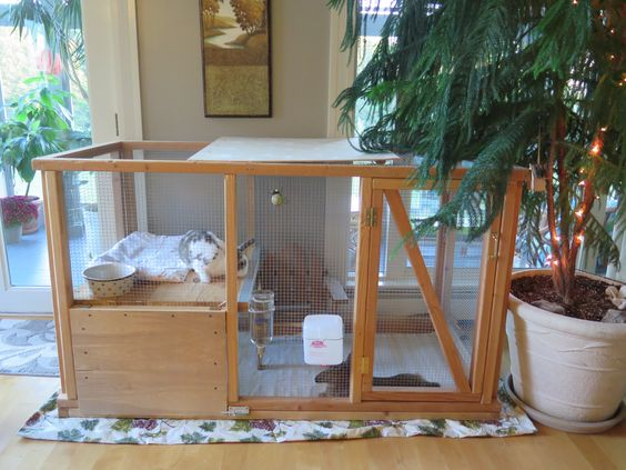 This was super easy to build.  It took the weekend to construct.   Cost under $100.00.  The litter box and hay is under the shelf.   The top left portion lifts off making it easy to feed and pet your rabbits.  The lower door opens down to pull out the litter box for cleaning. I had it open up before as you see in the picture, but you had to  crawl under to grip the litter box and place hay. I have since added a ramp for them.  I have added 3 more pictures but can't link them yet to this pic.