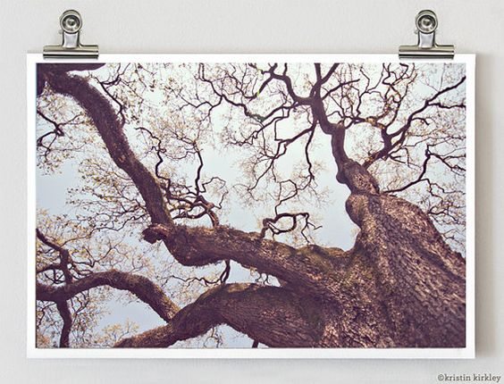 Old Oak Tree in New Orleans, Louisiana on St. Charles Street    Original SIgned FIne Art Photograph    TITLE: Oak Tree  SIZE: 8x12    All
