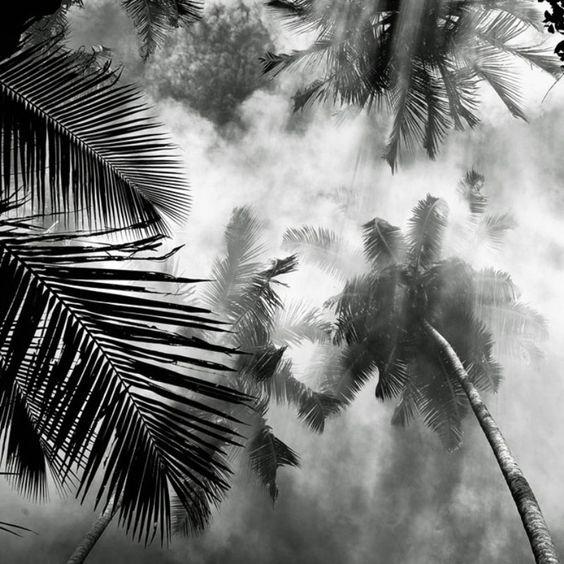 Névoa sobre os coqueiros. Na Indonésia.