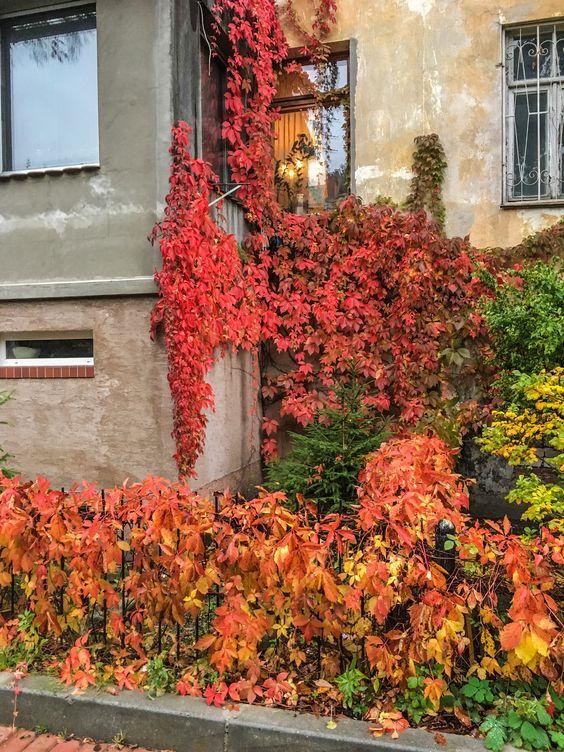 К концу сентября все больше ярких красок в городе. Фото Жени Шведы