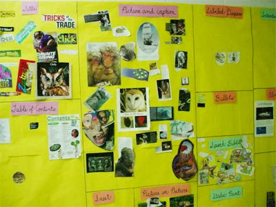 Interactive Text Feature Wall--teaching non-fiction text features