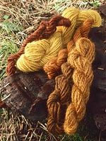 Yarn dyed from Phaeolus schweinitzii