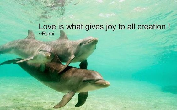 Love is what gives Joy to all creation ~ Rumi: