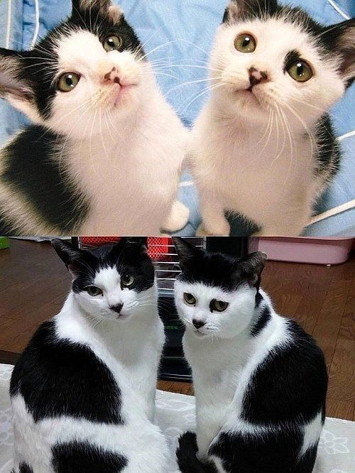 Catscharm Com Then And Now Kittens Catsoftwitter Pictures Kitten Caturday Cute Baby Cats Happy Cat