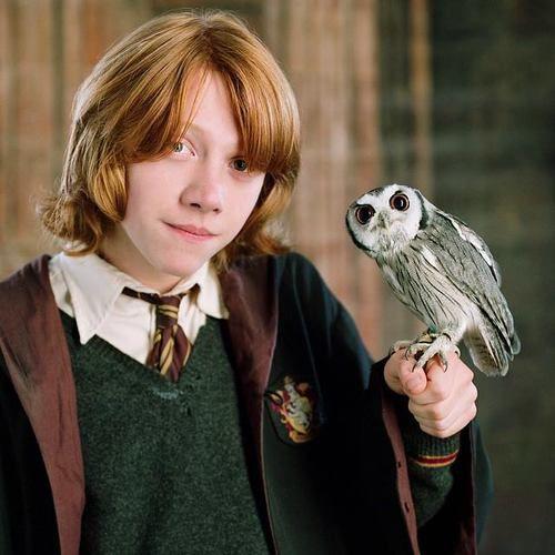 Pigwidgeon Harry Potter Owls