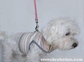 шлейка для собаки своими руками пошаговая инструкция - фото 2
