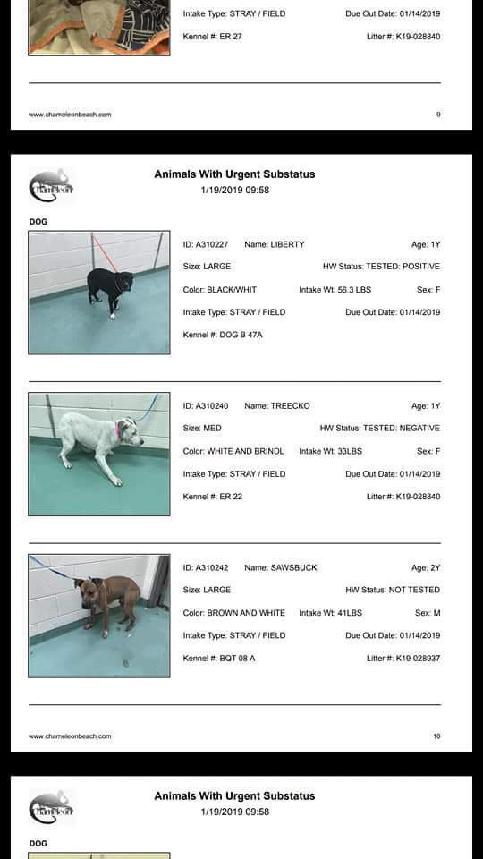 1 19 19 Sos High Kill Short 16 Kennels Today Out Of Space
