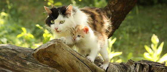 Wondering how to litter box train a kitten