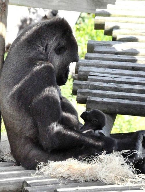 Scatter real photos of zoo babies and theirs mothers on the tables or use as centerpieces for a real life look at zoo animals #zoobabyshower #babyshower