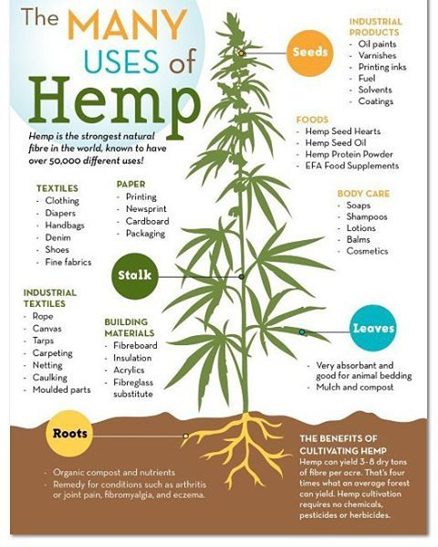 The 2 best building supplies are #hemp and bamboo. Not only is hemp more useful than duct tape but it doesn't have the negative effect of most of the products it can replace. #buildingsupplies #prepper #preppers #preppertips #preppertip...