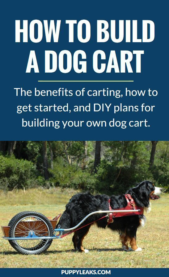 Why Not Build A Dog Cart Dog Care Dogs Dog Training