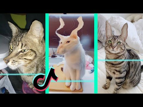 I M Here I M Not A Cat Video In 2021 Funny Captions Funny People Funny Facts
