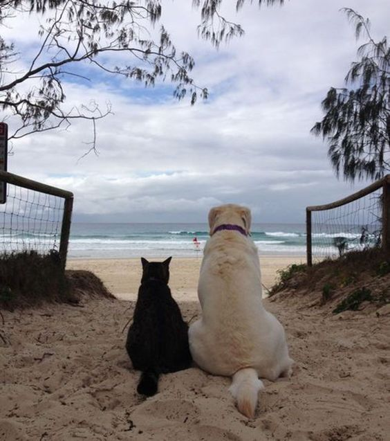 Photo : Seuls face à la mer...