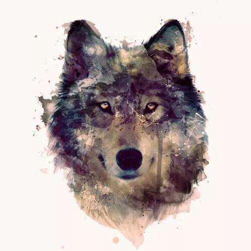 Amazing Wolf: Pinterest • The World's Catalog Of Ideas