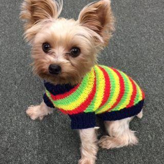 Jacquard's Grownup Dog Sweater $$$