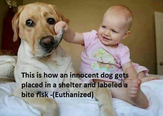 It S Not So Cute If The Dog Bites The Baby When People