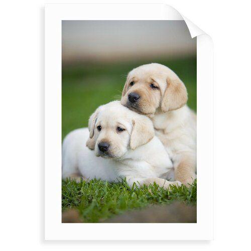 Yellow Labrador Retriever Puppies Photograph East Urban Home Size
