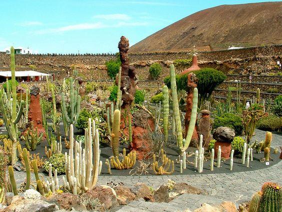 Diferentes especies de cactus crasas en el jard n de for Diferentes jardines