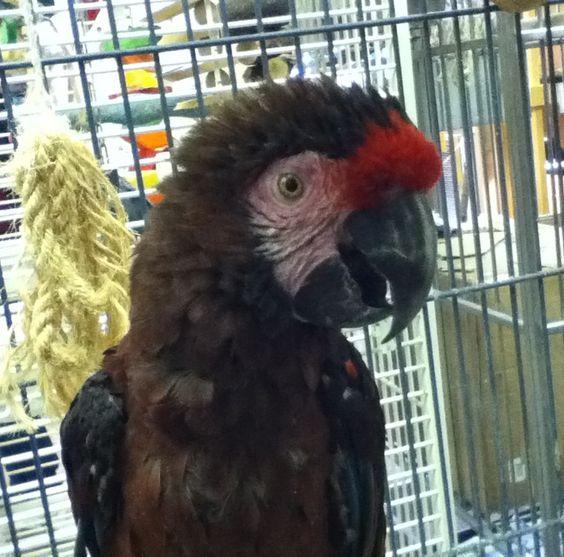 Parrot love <3