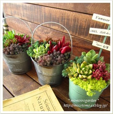 succulent pails