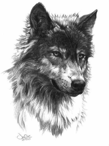 "Julie Bell sketch 2000 ""wolf head"" 