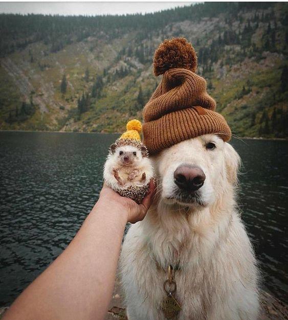 Untitled cute   Puppy   Dog   animal   pets