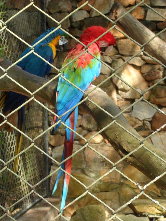 Araras - Zoo de São Paulo
