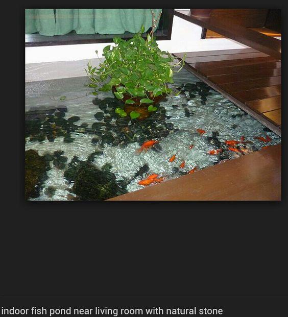 Indoor Goldfish Pond Ponds Pinterest Goldfish Goldfish Pond And Ponds