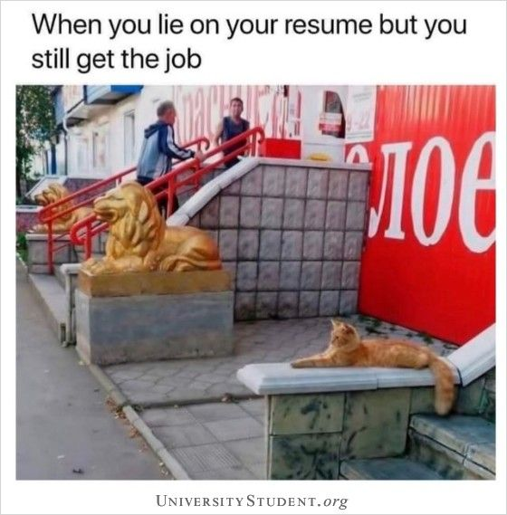 When You Lie On Your Resume But Still Get The Job Cat In 2020 Funny Animal Photos Best Funny Pictures Cat Memes