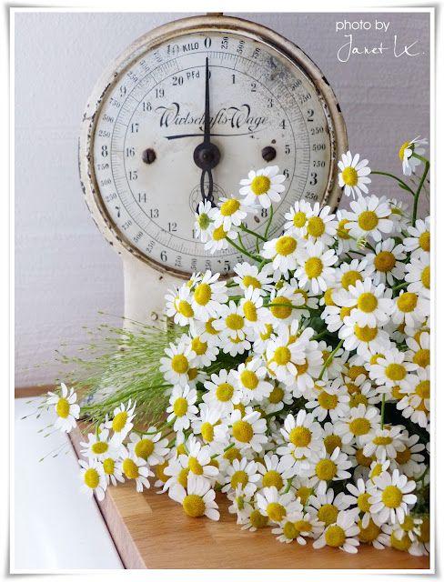 light as a daisy