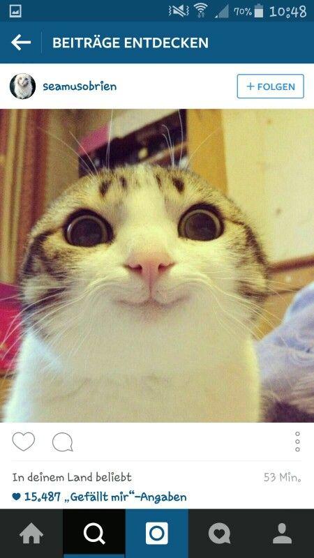 Katze guckt mit Großen augen