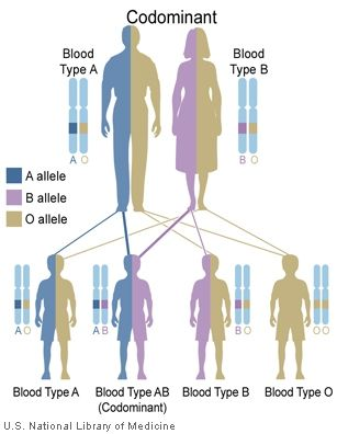 Which Abo blood group genetics his poems