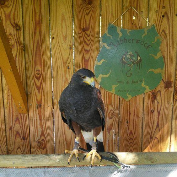 Un oiseau et une enseigne pour signaler que je serai présente ce dimanche 25 sur les médiévales des Marches de Bretagne avec les rapaces du Faucon Solognot et que j'aurais des enseignes dans mon escarcelle!!! Venez donc découvrir mon travail en vrai 🙂