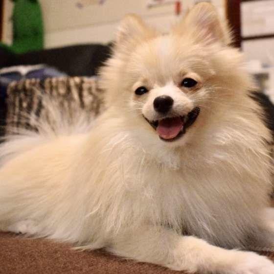 愛犬を亡くしペットロスを経験 前向きな気持ちになれたきっかけとは いぬのきもちweb Magazine おかしな動物 ペットロス かわいいペット