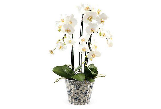 "25"" Phalaenopsis in Ceramic Pot, Faux on OneKingsLane.com"