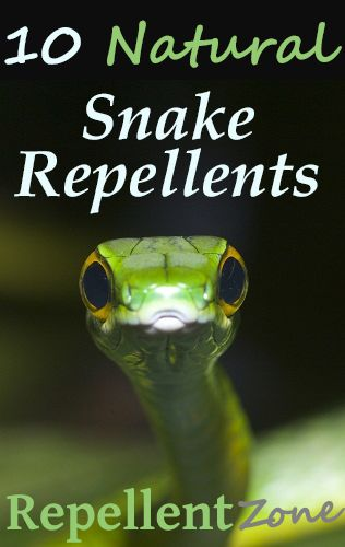 A great Do-It-Yourself guide for getting rid of snakes, permanently!   Did you know that all snakes can be repelled from your property by some simple homemade hacks? Check out Repellent Zone for the top ten methods (that actually work) to get rid of your snake problem naturally... once and for all!
