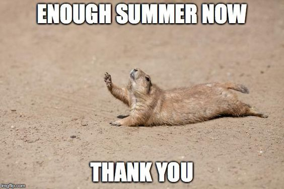 16 Animals Who Are Having Trouble Dealing With The Heat Wave Memes Weather Memes Hot Weather Humor Funny Weather