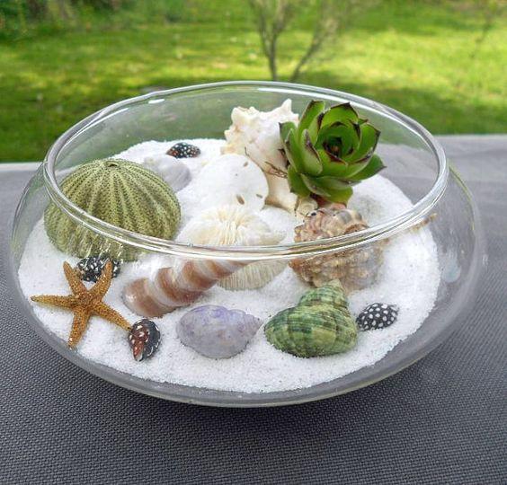 diy, Terrarium, OCEAN Dish GARDEN, Hen and Chick Succulent: Ocean Dish, Terrarium Gardens, Hens And Chicks, Garden Ideas, Diy Terrarium, Garden Hen, Beach Terrariums