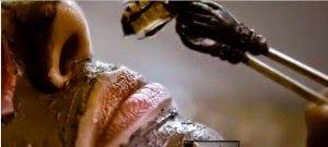 Salute-e-Bellezza: Veleno d'Api: un altro dono di questo insetto mera...