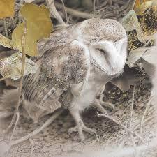 Afbeeldingsresultaat voor paul christiaan bos uilen