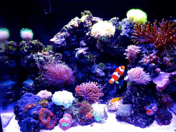 Check out my coral reef saltwater tank nano aquarium http for Aquarium nano marin