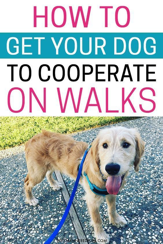 How To Get Your Dog To Cooperate On Walks Dog Training Dog