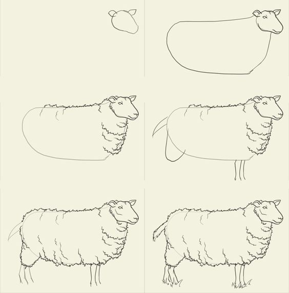 how to draw sheep fartsy pinterest drawings animal and draw animals