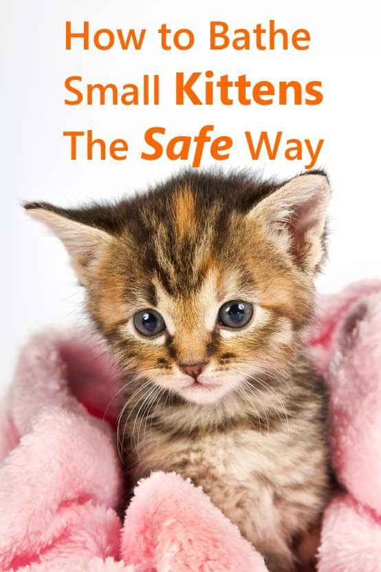 How To Bathe Small Kittens The Safe Way Tips That Could Save A Kitten S Life Small Kittens Kitten Care Cat Training