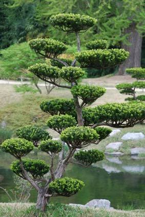 Niwaki : Trucs astuces et conseils pour réussir ses niwakis: