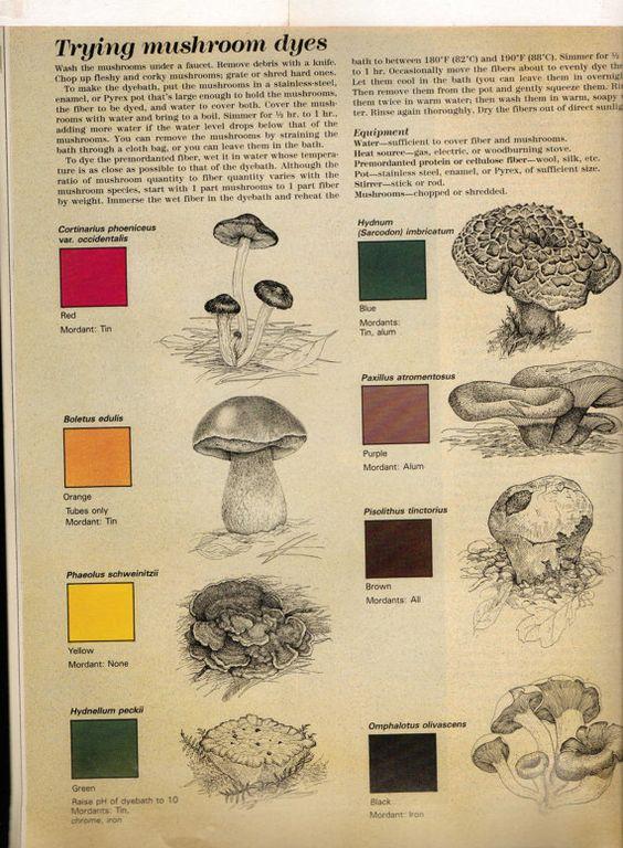 Mushrooms as dyes